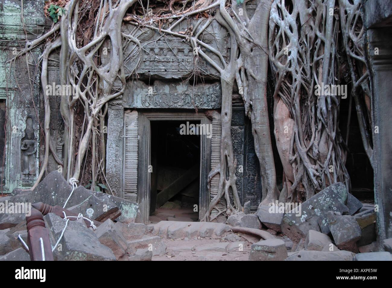 Strangler fig around the doorway used in the Film Lara Croft Tomb Raider at the Ta Prohn temple, near Siem Reap, - Stock Image