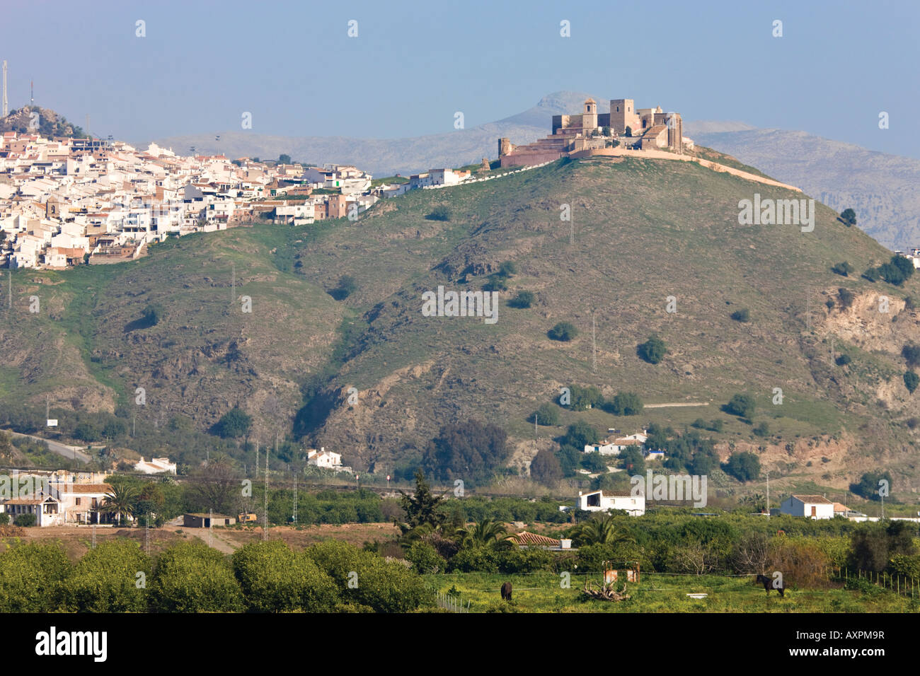 View across olive groves to Alora Inland Costa del Sol Malaga Province Spain Stock Photo