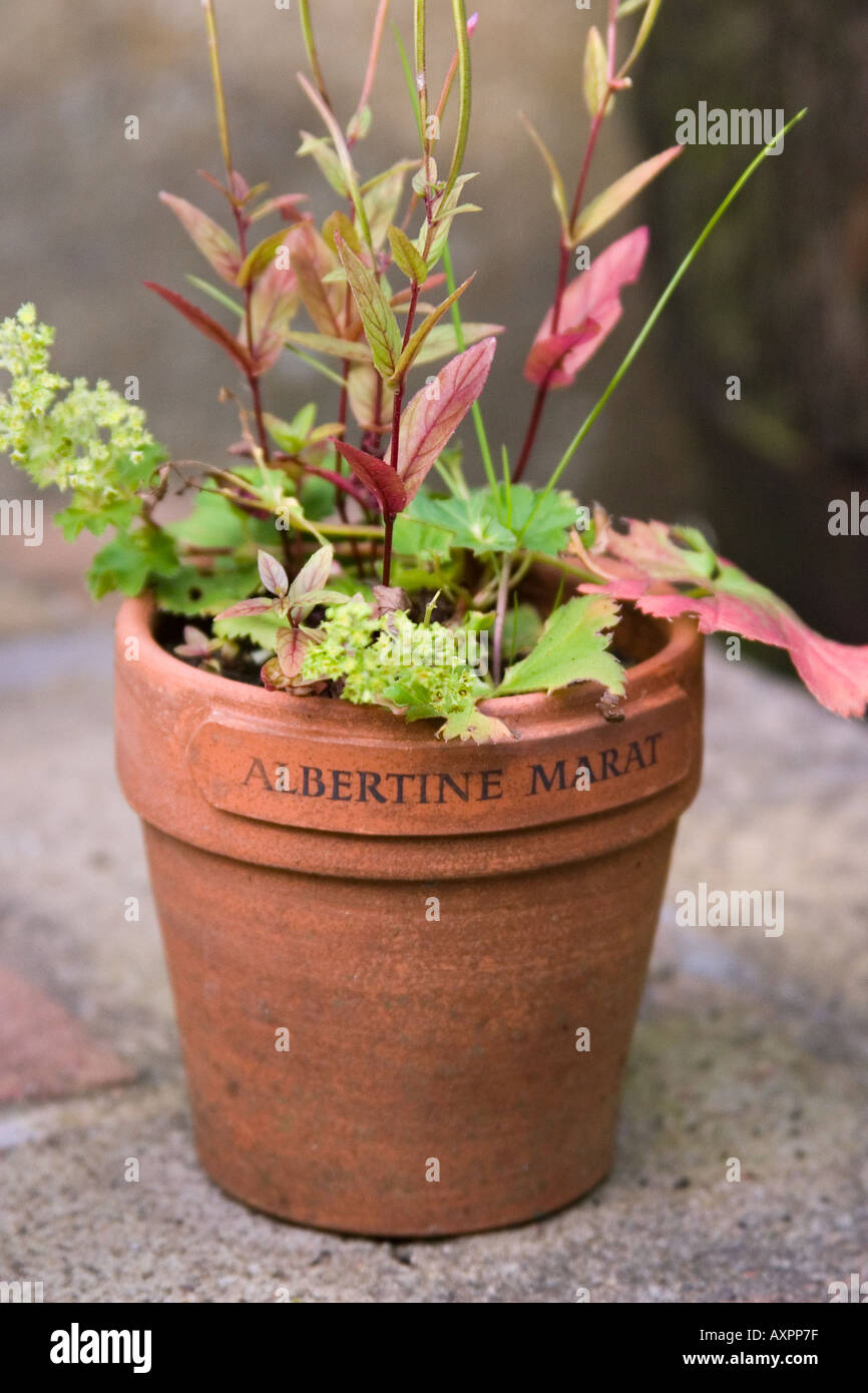 Plant and pot bearing the incription 'Albertine Marat'. Ian Hamilton Finlay's Garden, Little Sparta. - Stock Image