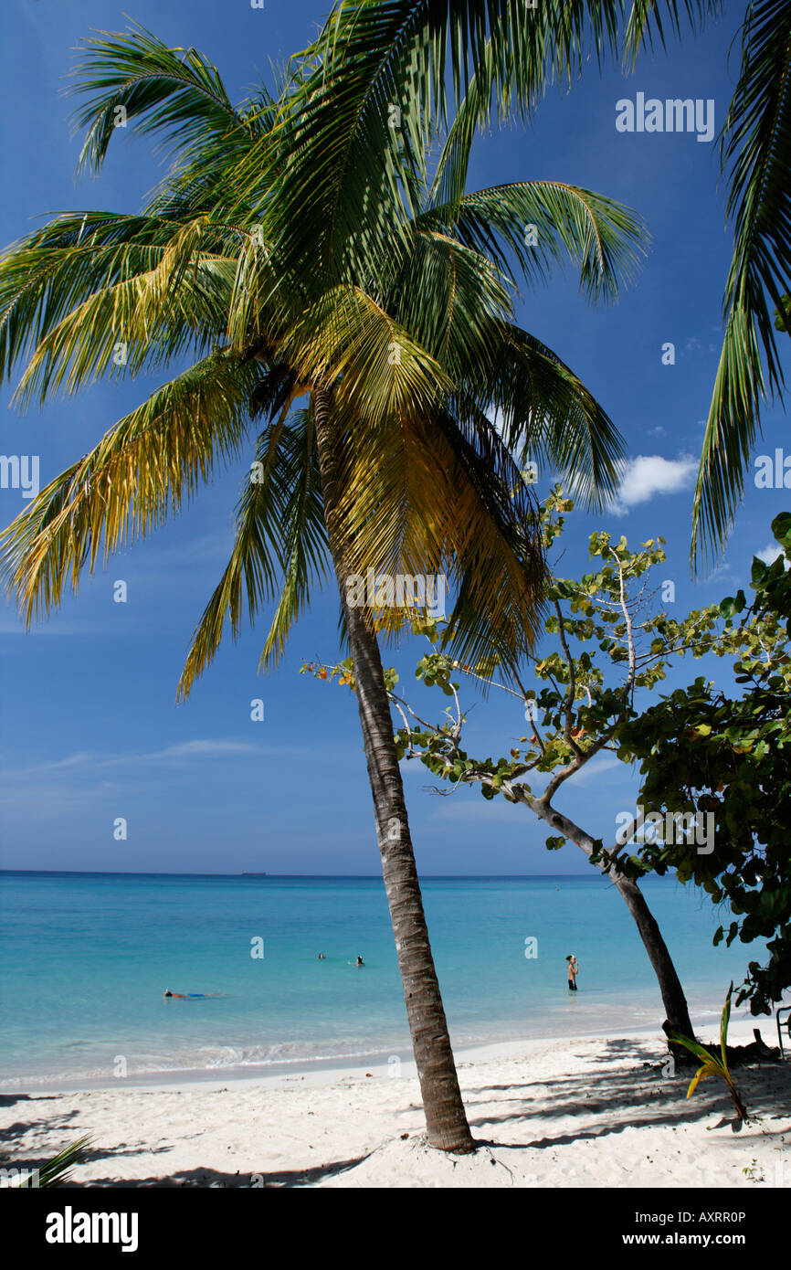 Jamaica Negril beach palm trees - Stock Image