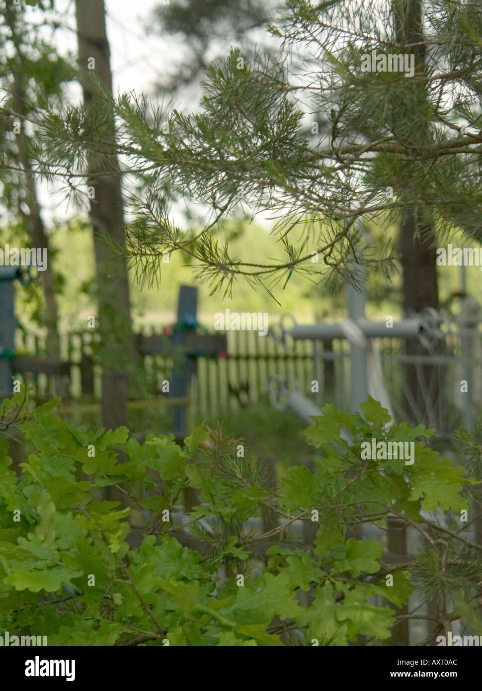 In focus foliage and tree branches with out of focus crosses behind in graveyard, Chernobyl nuclear exclusion zone Ukraine Belarus border - Stock Image