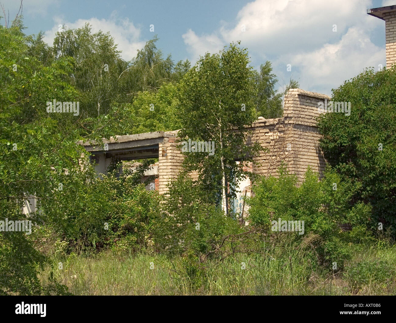 Ruins of brick buildings overgrown by trees in Chernobyl exclusion zone Ukraine Belarus state border - Stock Image
