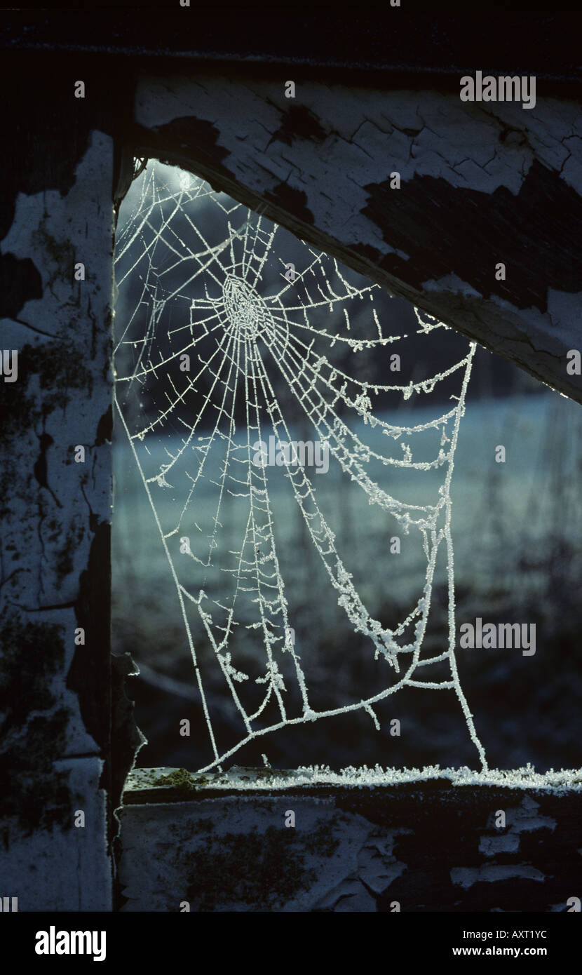 Early morning frost on spiders web in the joint of a wooden gate - Stock Image