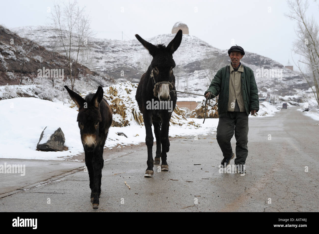 A farmer drives two donkeys in Chicheng county, Hebei province, China. 28-Mar-2008 - Stock Image