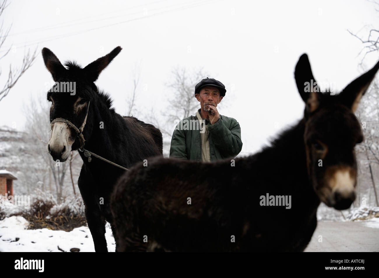 A farmer drives donkey in Chicheng county, Hebei province, China. 28-Mar-2008 - Stock Image
