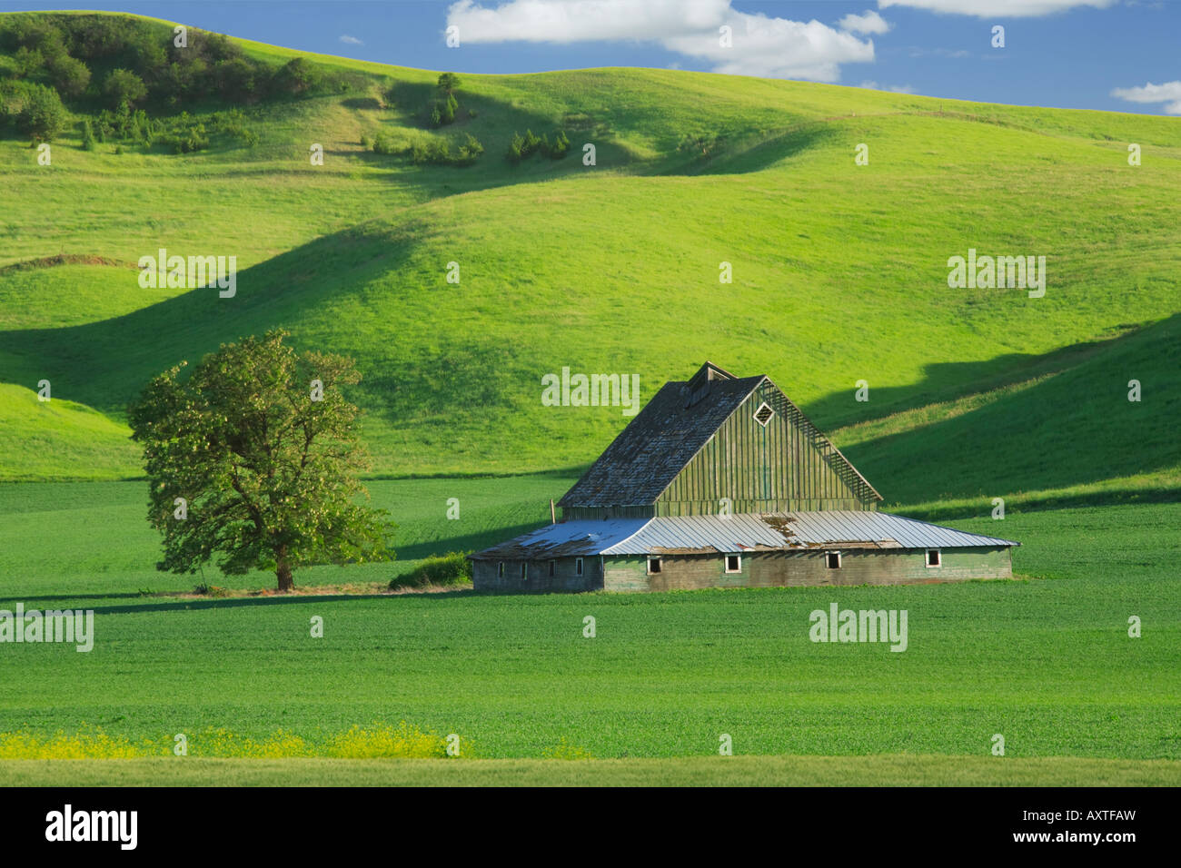 Barn in Palouse area of eastern Washington state - Stock Image