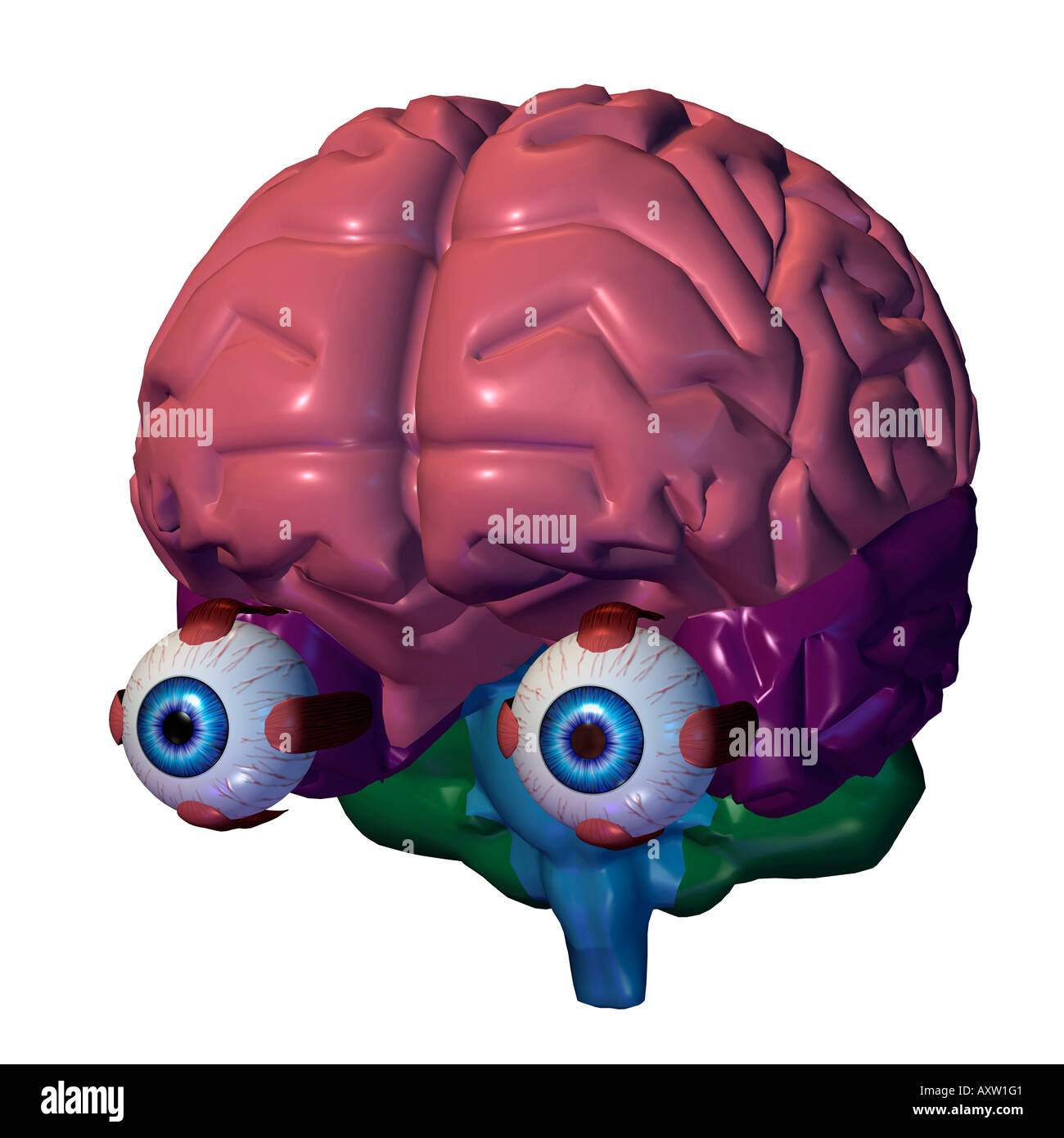 Close-up of a human brain with eye balls Stock Photo: 9668032 - Alamy