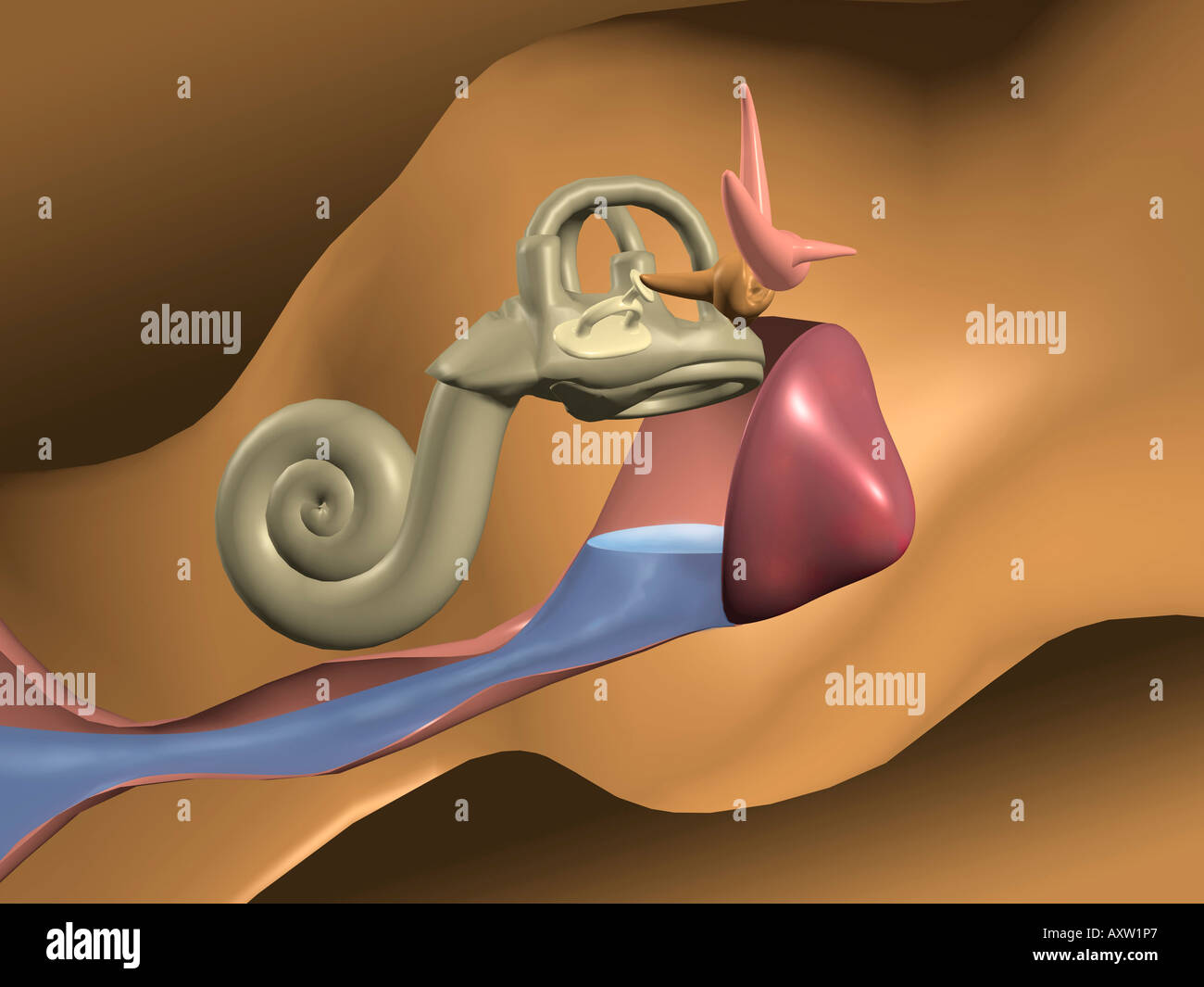 Ear Infection - Stock Image