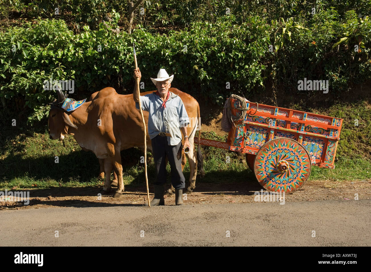 Man with decortated ox cart, Central Highlands, Costa Rica - Stock Image
