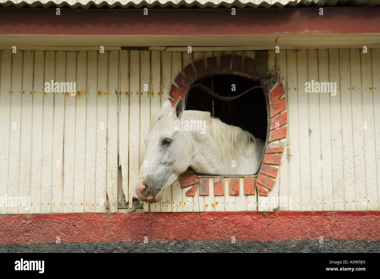 Horse in stables on way to Monteverde, Costa Rica Stock Photo