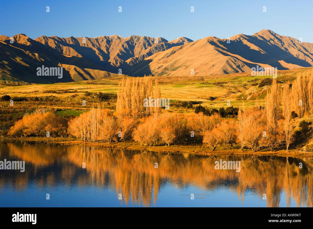 Glendhu Bay, Lake Wanaka, Wanaka, Central Otago, South Island, New Zealand, Pacific - Stock Image