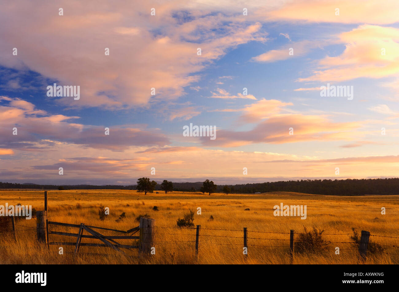 Pasture at sunset, Bronte Park, Tasmania, Australia, Pacific - Stock Image