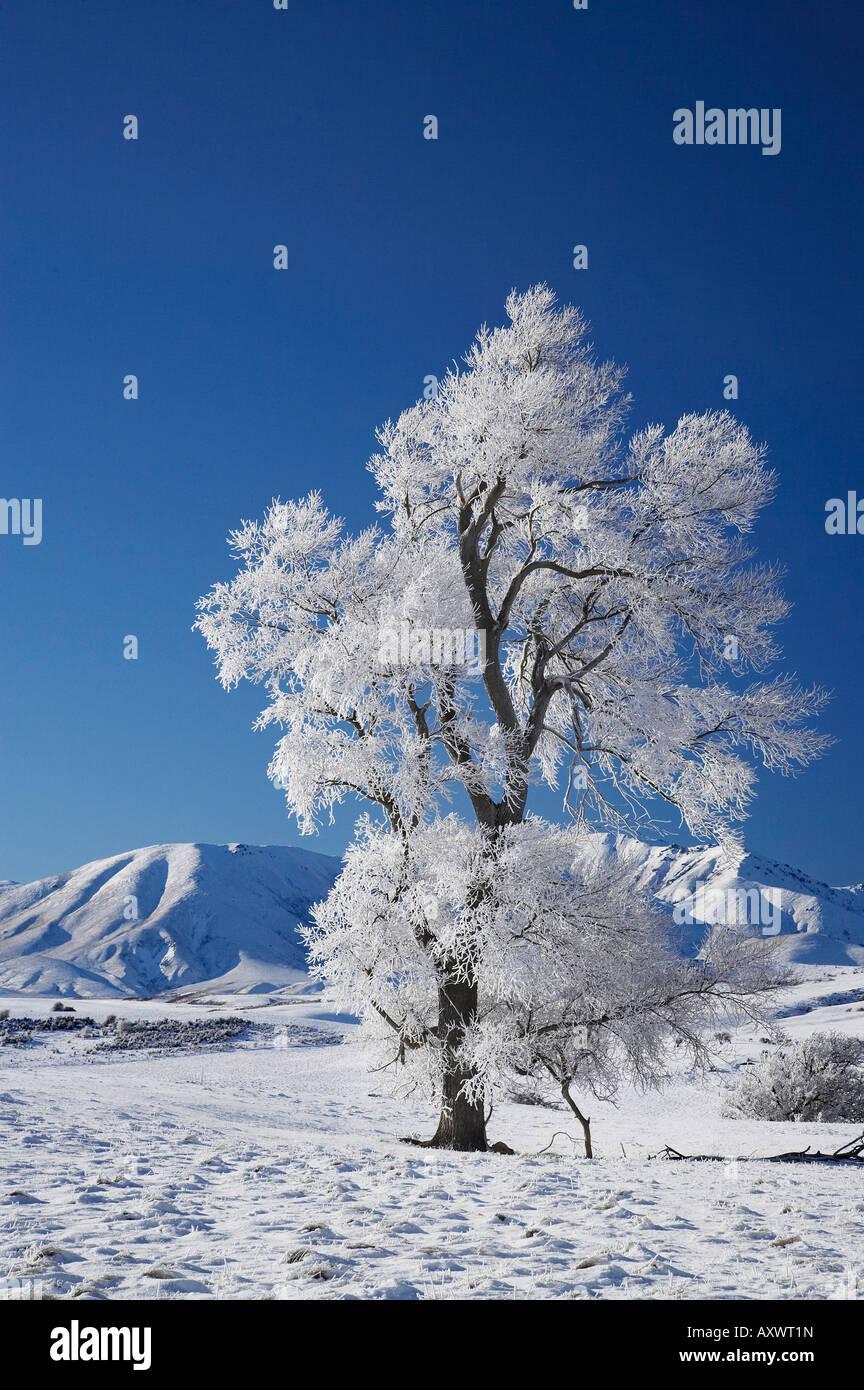 Hoar Frost on Farmland near Wedderburn and Ida Range Maniototo South Island New Zealand - Stock Image