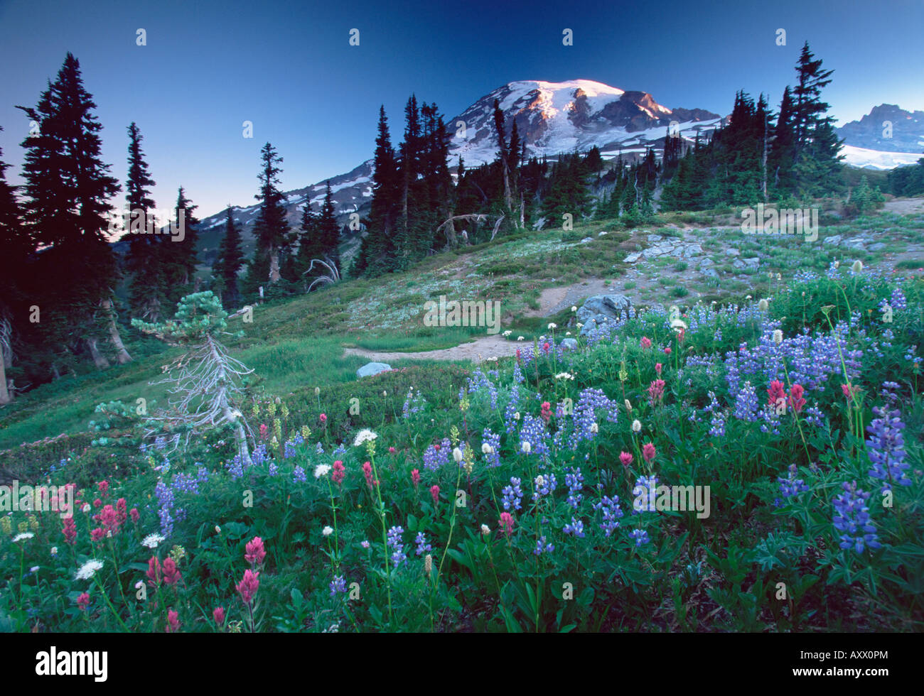 Landscape with wild flowers, Mount Rainier National Park, Washington state, United States of America, North America - Stock Image