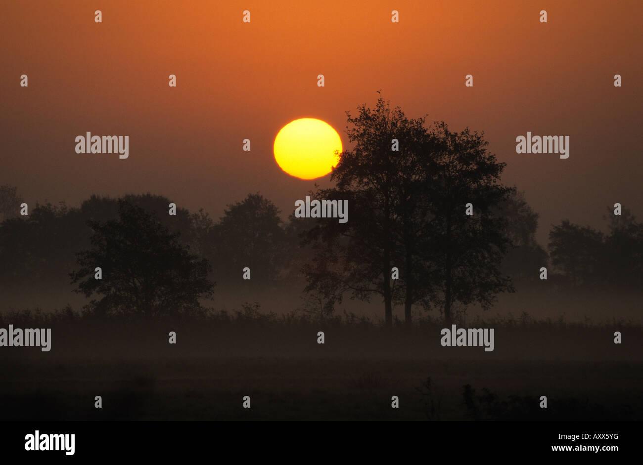 Sunrise, Fischland, Mecklenburg-Vorpommern, Germany - Stock Image