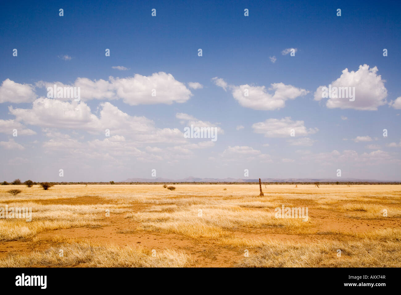 Typical landscape with termite mounds, Lower Omo Valley, Ethiopia, Africa - Stock Image