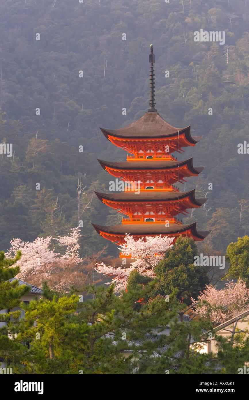 Cherry blossoms (sakura), Itsukushima (Itsuku-shima) shrine, Miyajima, Hiroshima area, island of Honshu, Japan - Stock Image