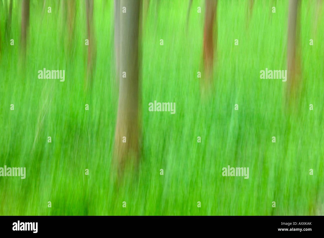 Trees, Forest, Bielefeld, NRW, Germany - Stock Image