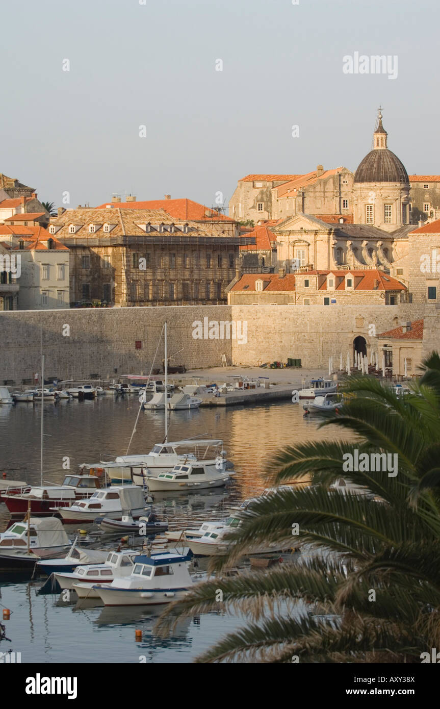 Palm at Harbour, Dubrovnik, Croatia Stock Photo