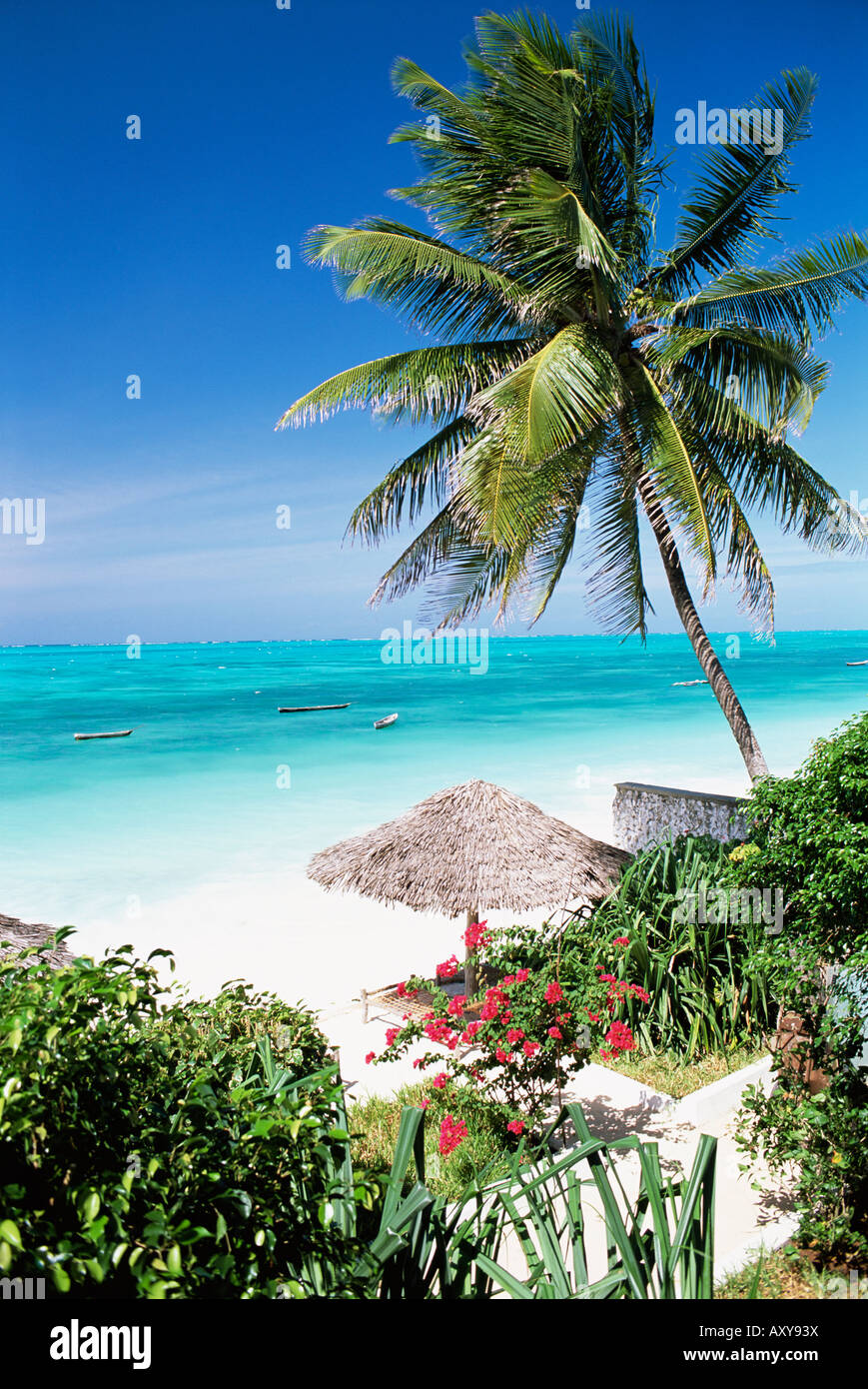 View through palm trees towards beach and Indian Ocean, Jambiani, island of Zanzibar, Tanzania, East Africa, Africa - Stock Image