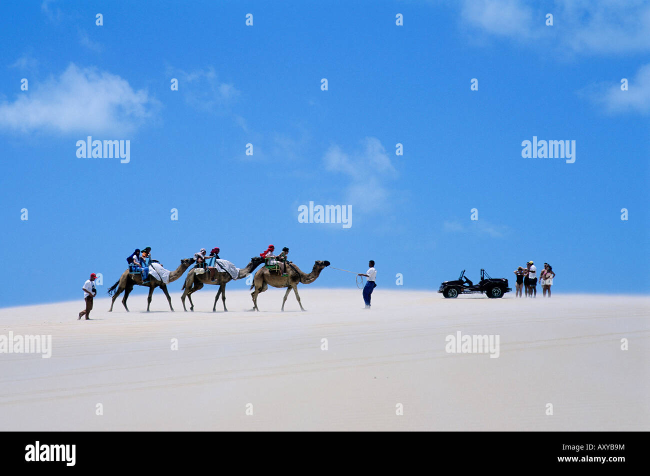a sight seeing camel train meets a stationery beach buggy and its