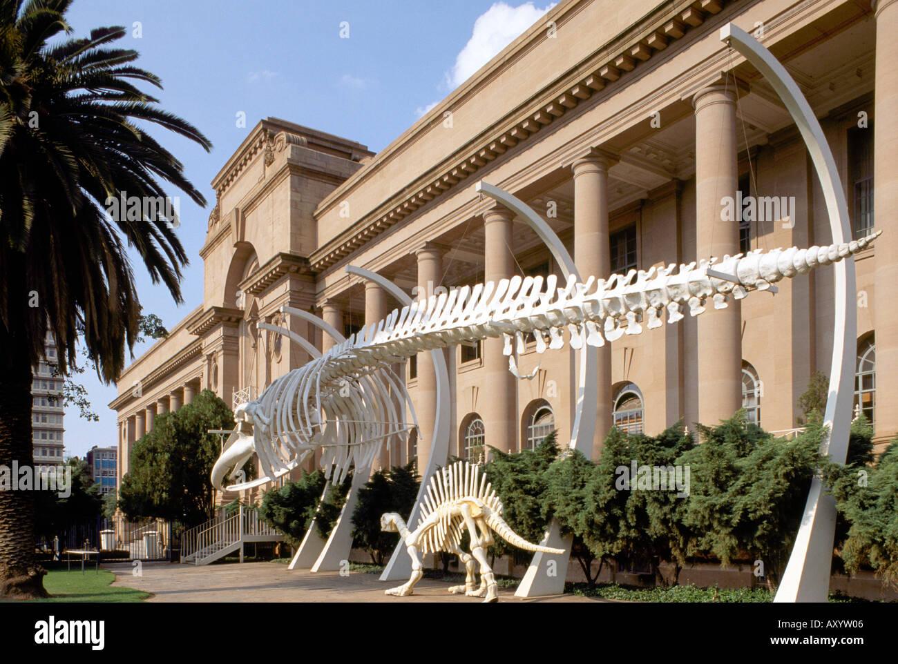 Pretoria, Transvaalmuseum, Naturkundemuseum - Stock Image
