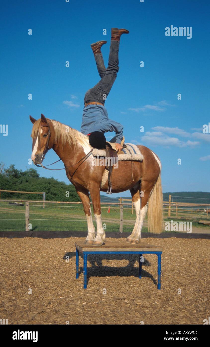 Circus Horse Stock Photos Amp Circus Horse Stock Images Alamy