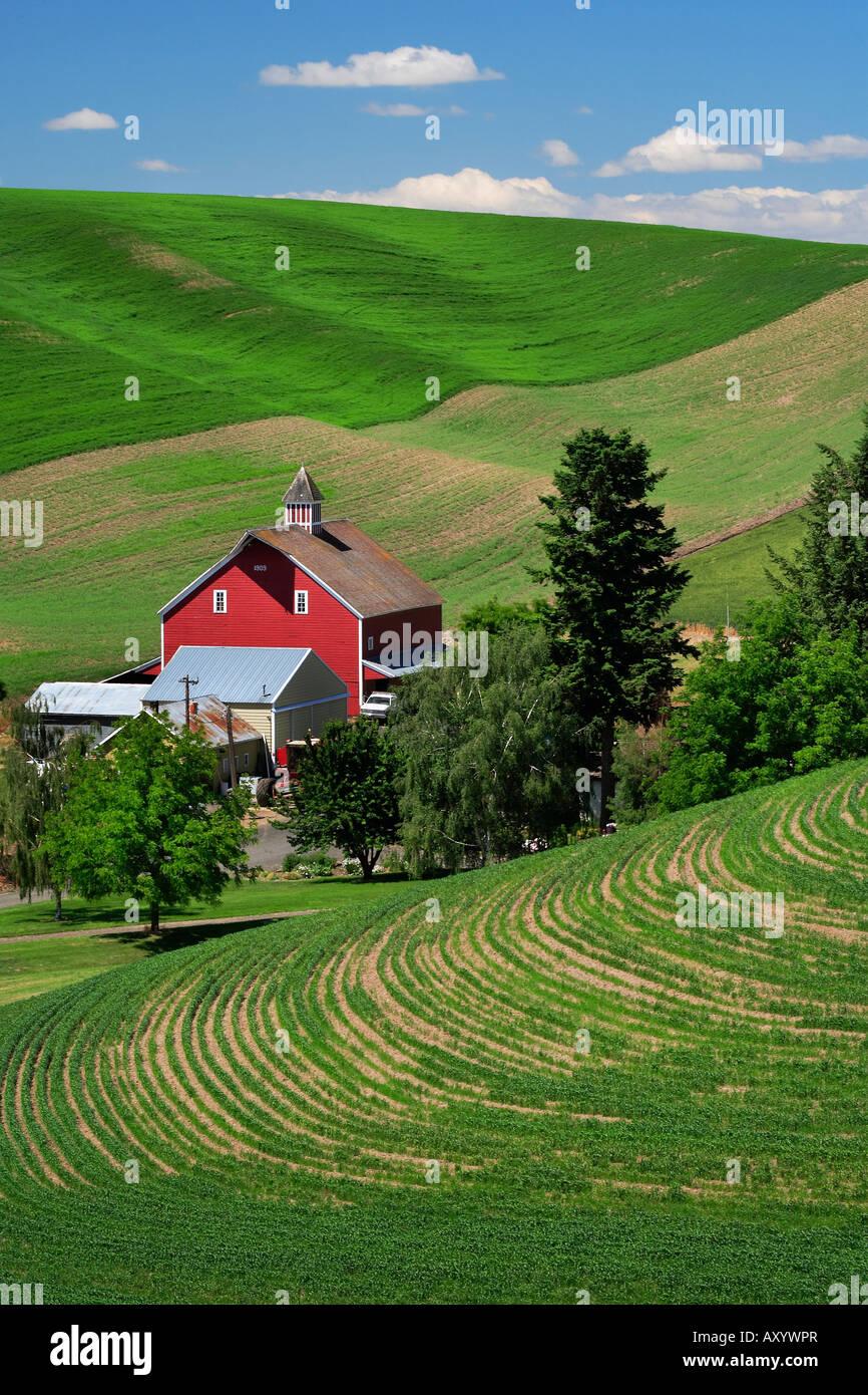 Farm buildings in the Palouse area of eastern Washington - Stock Image