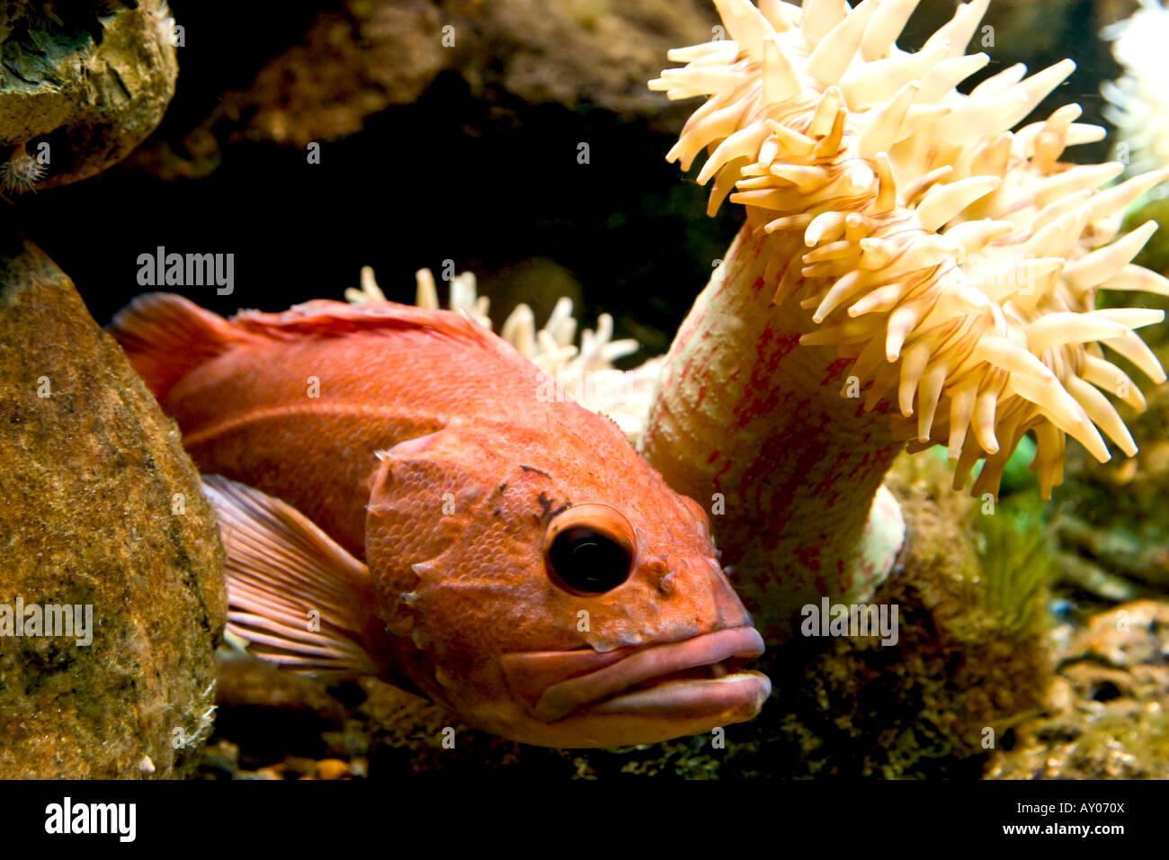 Ferocious fish Stock Photo