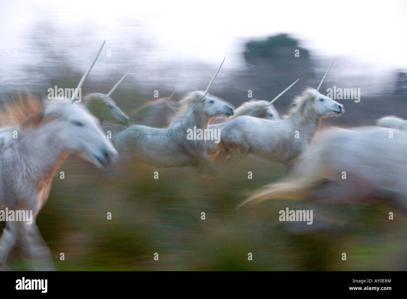 Unicorn herd - Stock Image