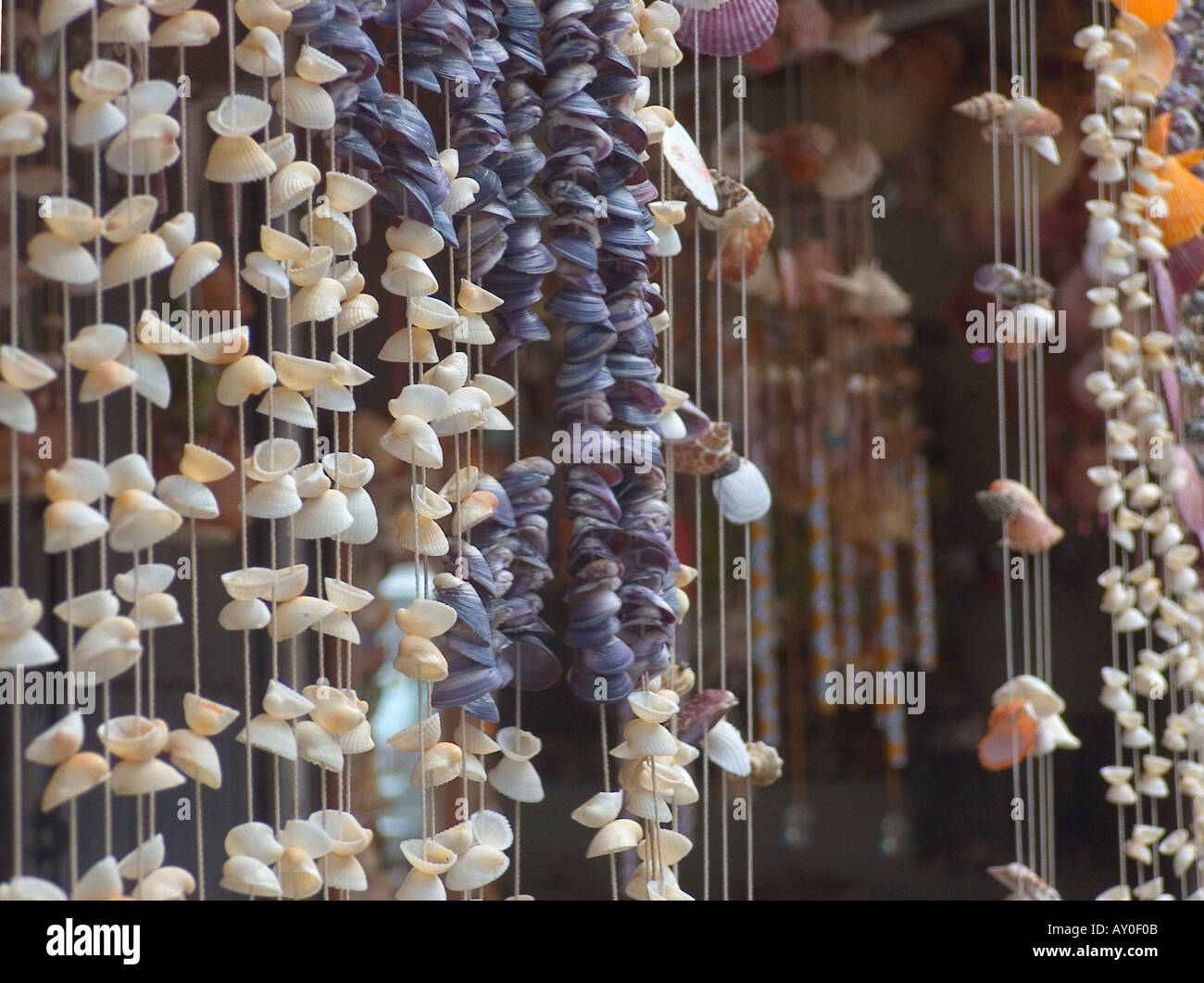 Sea Shell Door Curtains And Seashell Beads On Sale Rayong Thailand