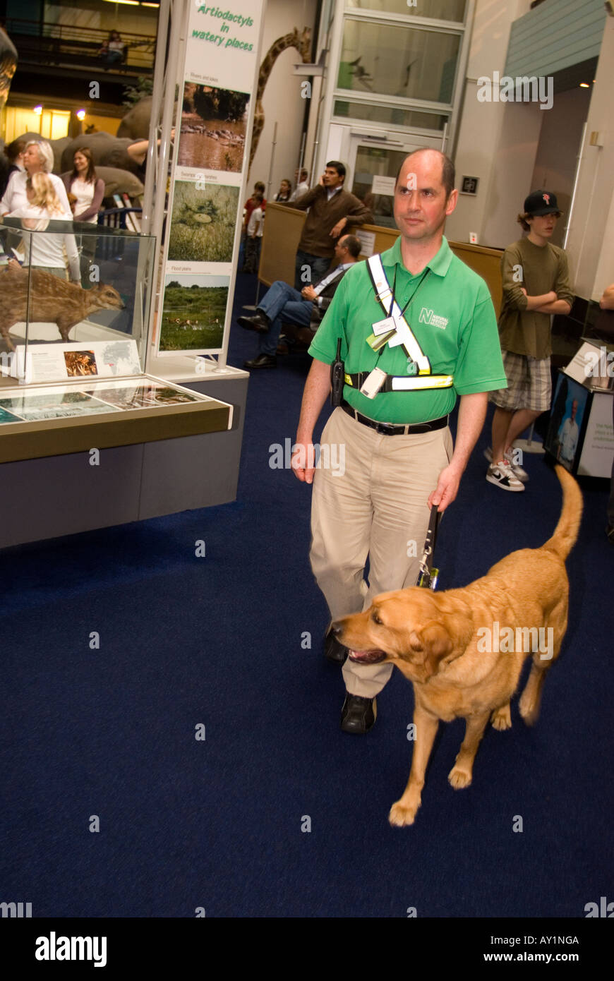 Working at guide dogs for the blind | glassdoor.