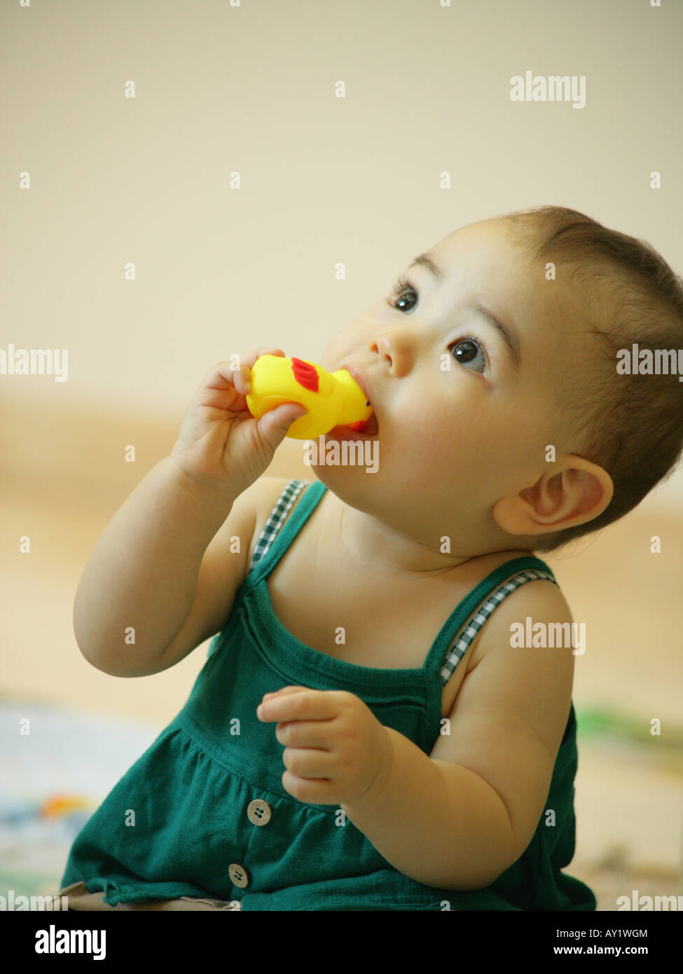 Close-up of a baby girl chewing a rubber duck Stock Photo: 16964947 ...