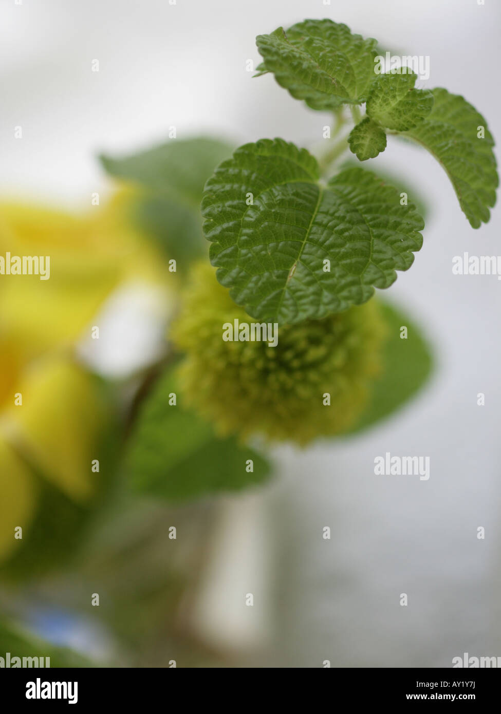 Close-up of a plant - Stock Image