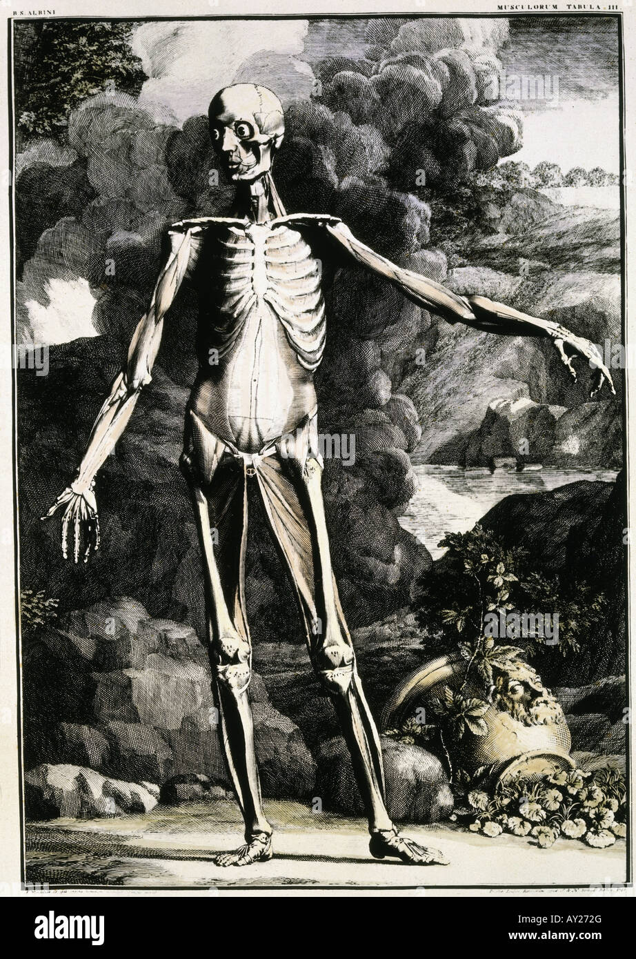 By Bernhard Siegfried Albinus, Leiden, 1742, Human Body, Skeleton ...
