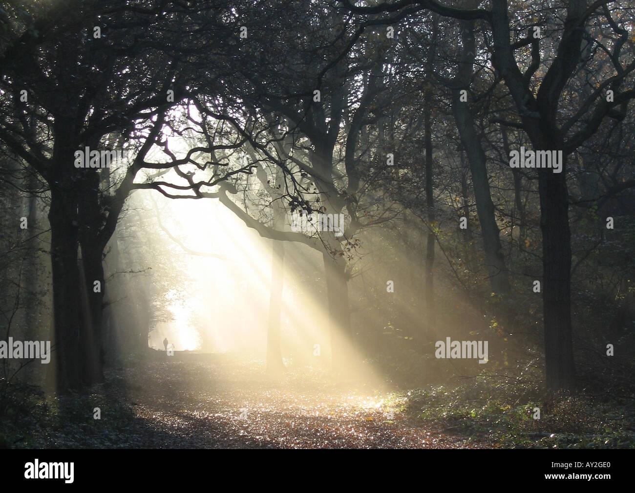 Sun shining through the trees in Kingswood Wood, Sanderstead, Surrey - 1 - Stock Image
