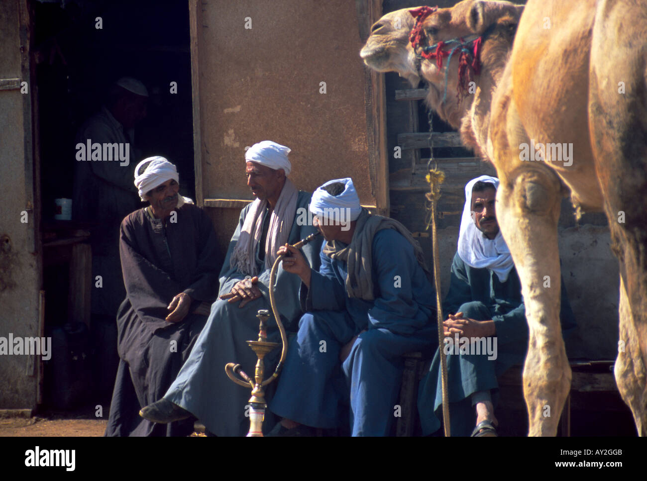 buy popular 0d8d8 86fab Met sitting at camel marke outside of Cairo, Egypt smooking ...