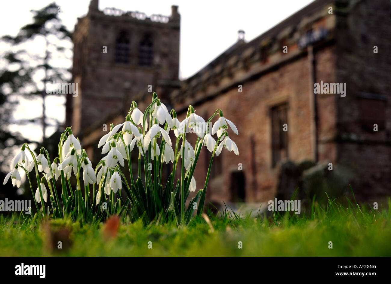 Snowdrops in churchyard of St Mary s Church Burford Shropshire England - Stock Image