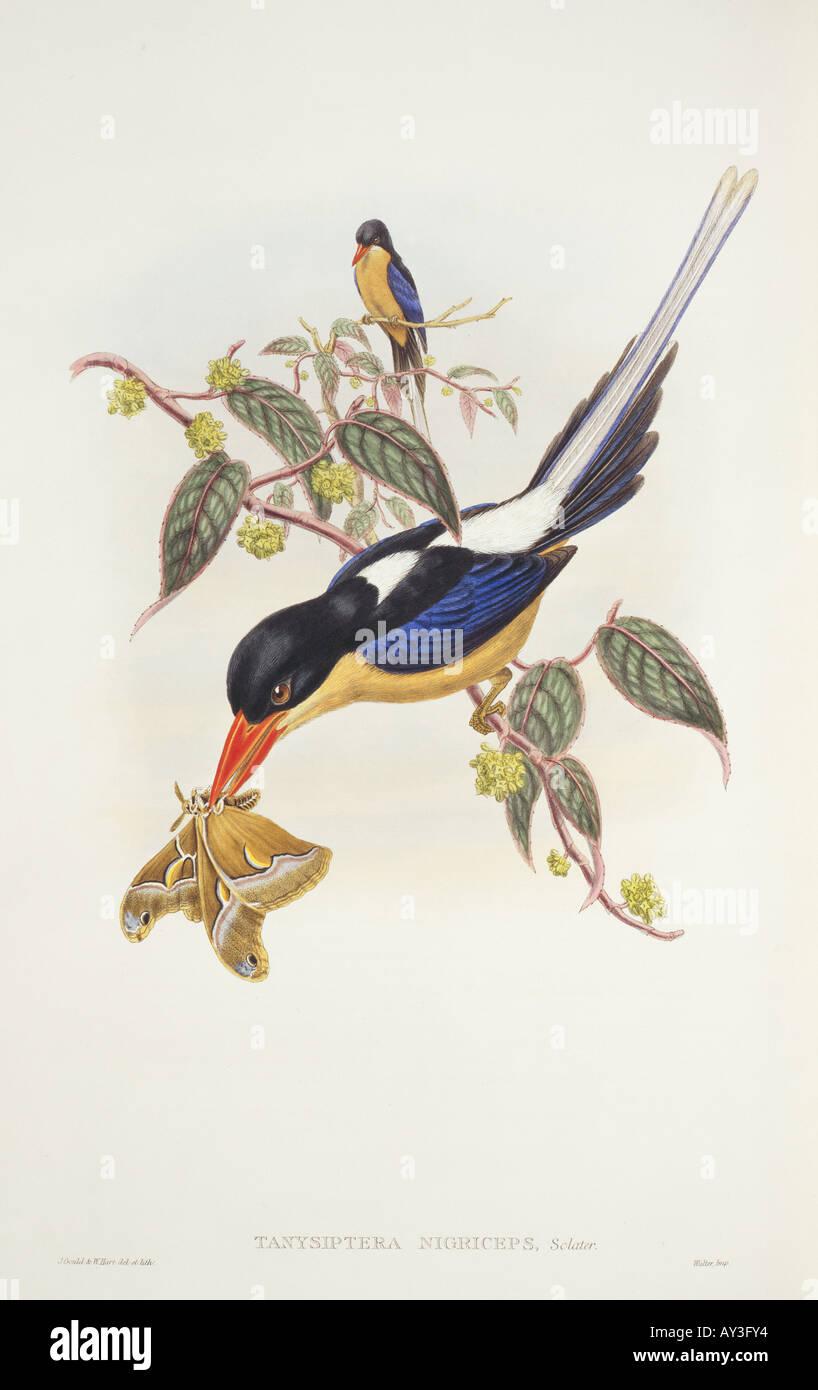 Twelve Wired Bird Of Paradise Stock Photos & Twelve Wired Bird Of ...