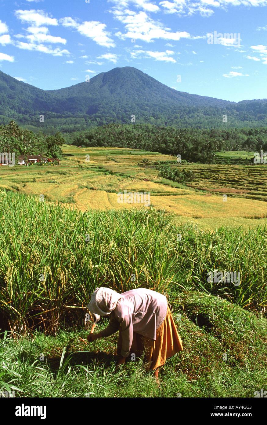 Indonesia Bali Jatiluwih and Mount Batukau Stock Photo