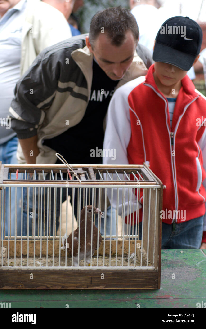 A man and boy looking at a caged racing pigeon for sale at