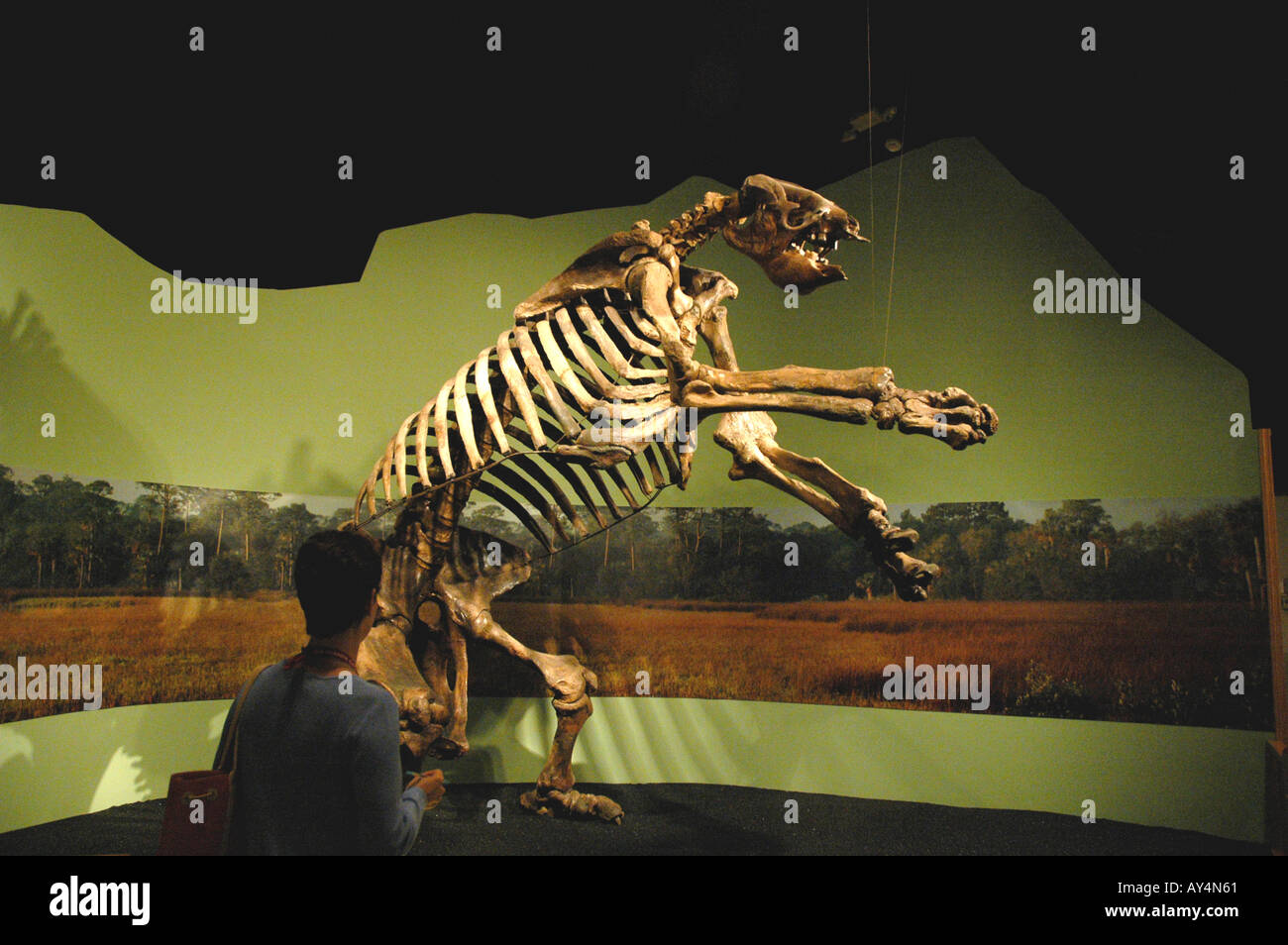 Giant Ground Sloth fossil - Stock Image