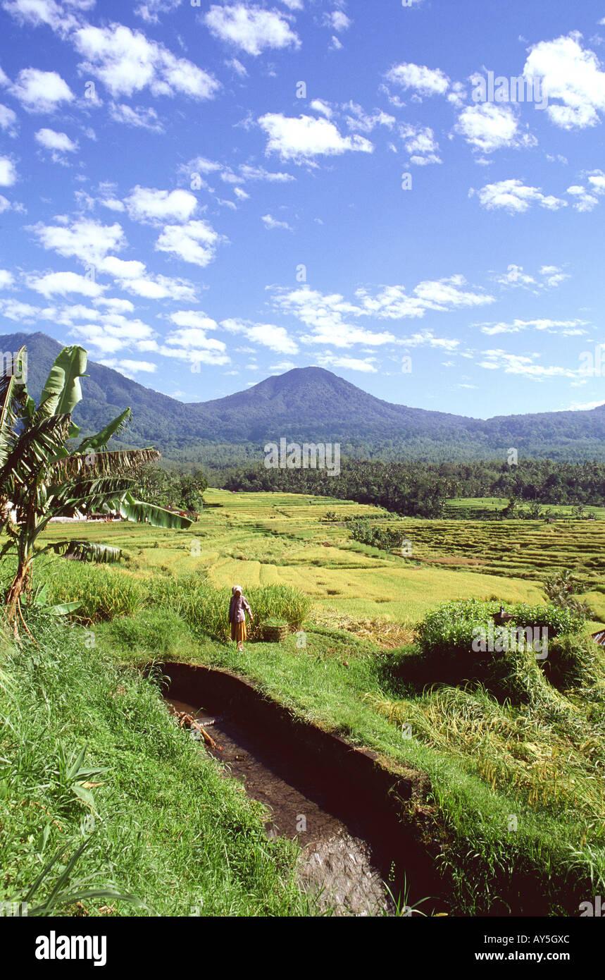 Indonésie Bali Jatiluwih et mont Batukau Stock Photo