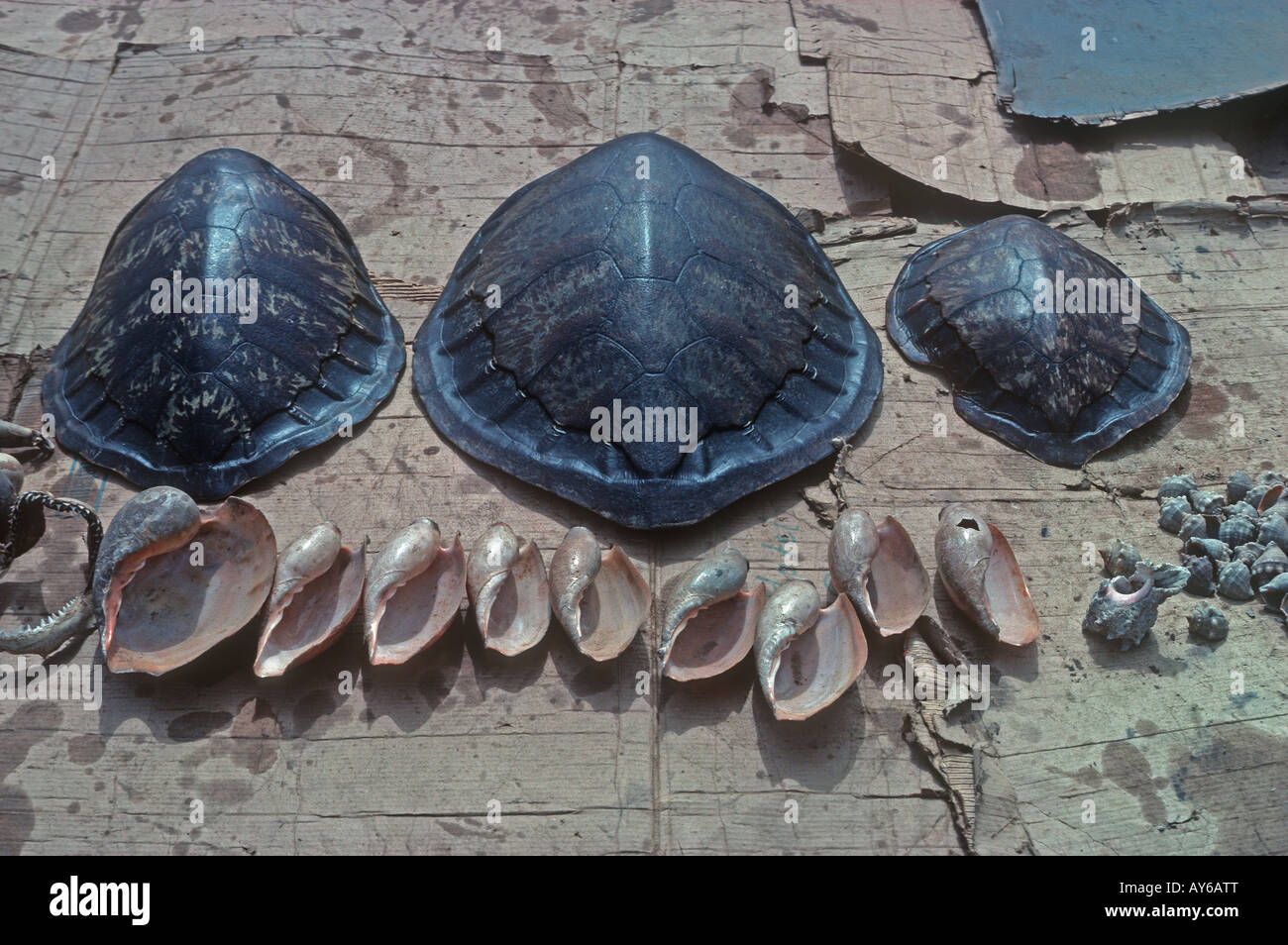Green Turtle Shells For Sale At Tourist Hotel The Gambia Stock Photo