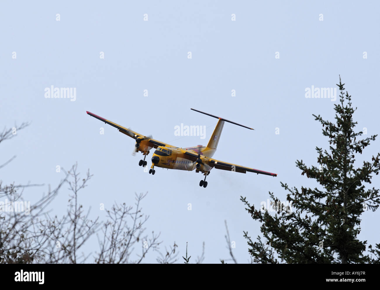 115465 DeHaviland Buffalo approaching Comox 19 wing Airfield. - Stock Image