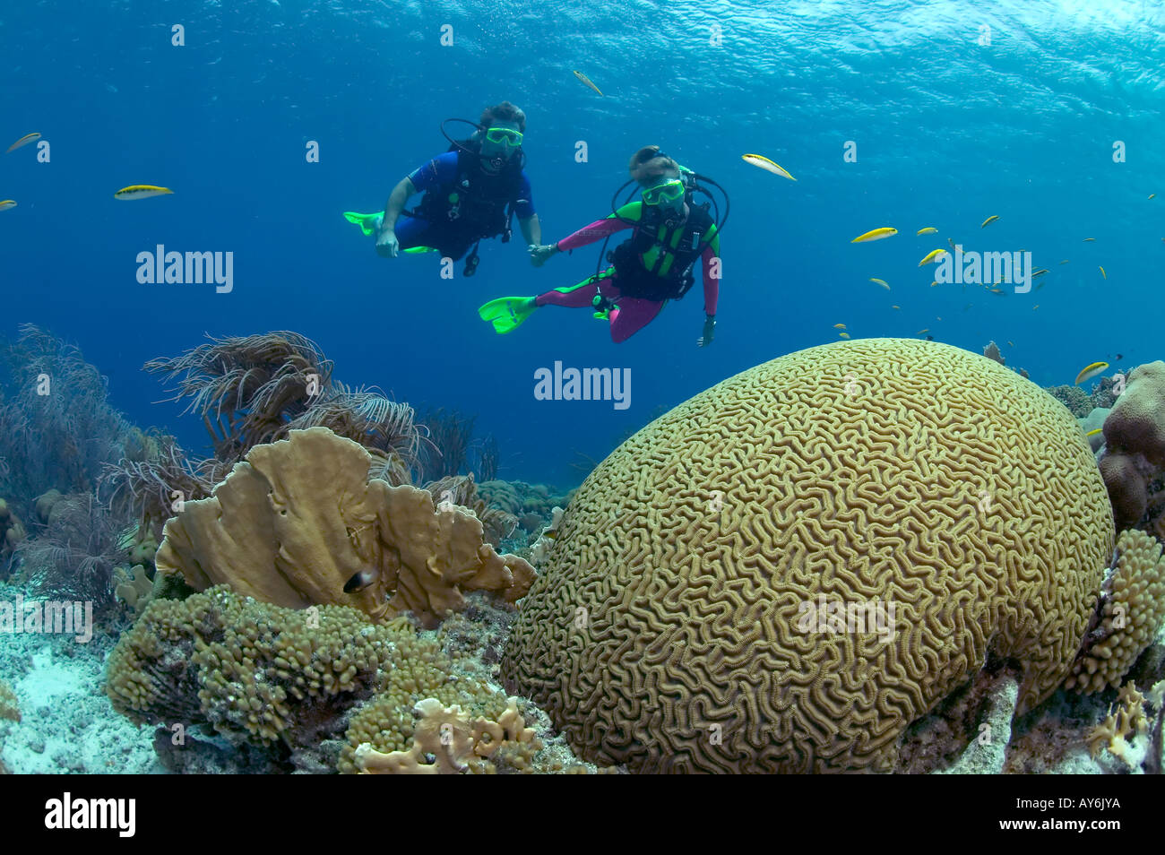 A PAIR OF SCUBA DIVERS ON A SHALLOW REEFTOP IN KLEIN BONAIRE - Stock Image