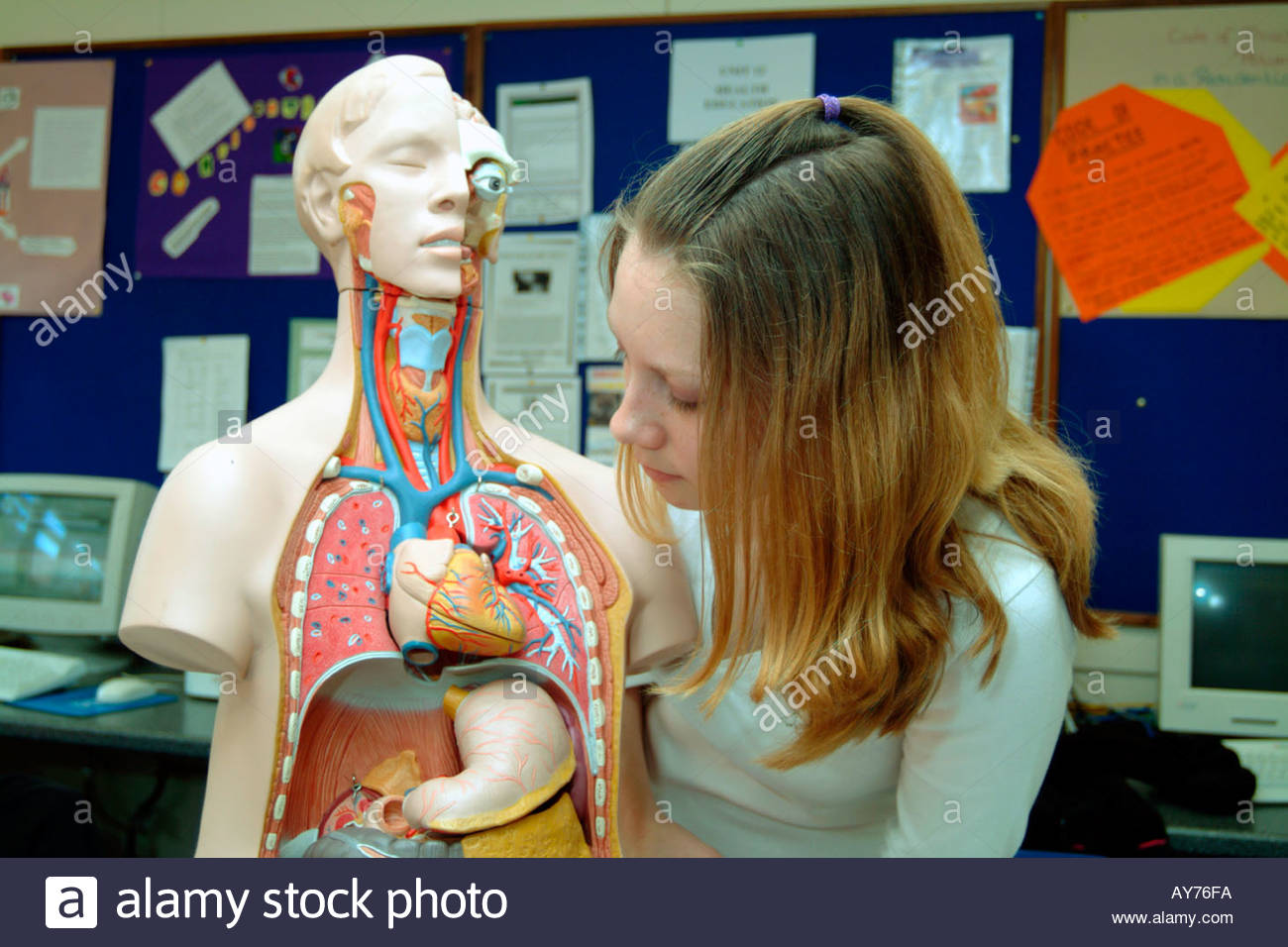 Students working on anatomical doll in health social care class at ...