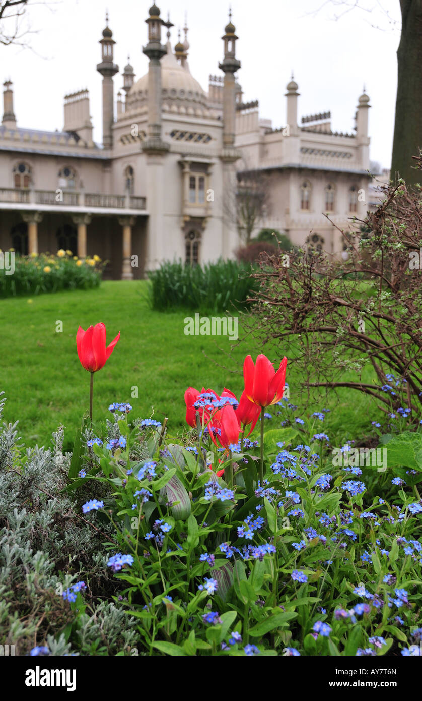 Red Tulips in the Brighton Pavilion Gardens, Brighton, East Sussex, England - Stock Image