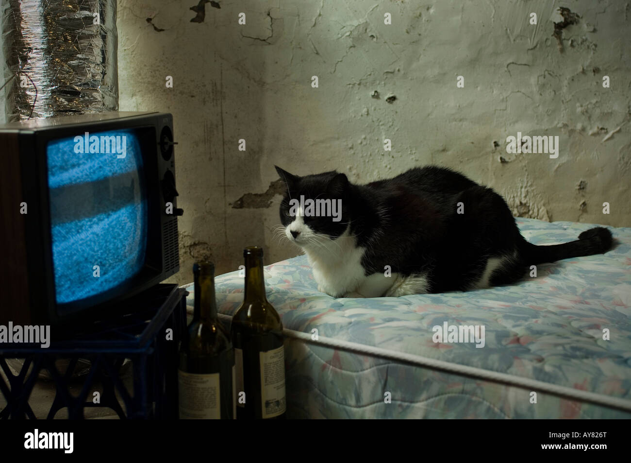 A black and white cat sitting on a mattress with wine and a TV - Stock Image