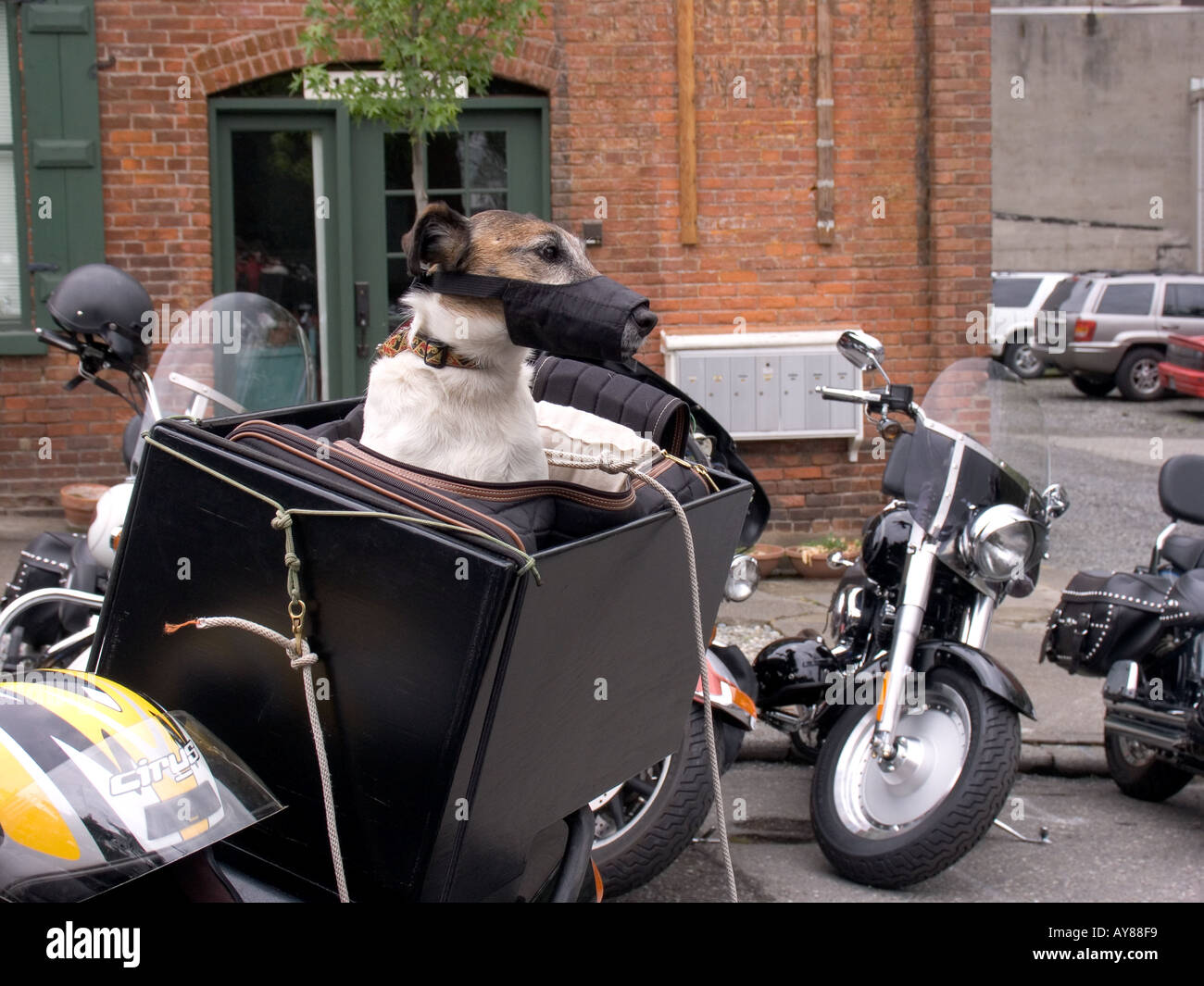 Small dog in special carrier on motorcycle - Stock Image